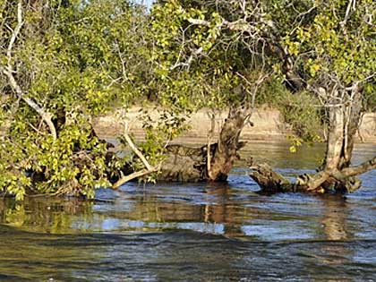 Crocodile near Chundu Island – Upper Zambezi Zambia (hi-res JPG)